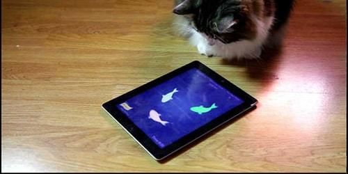 Aplikasi Kucing